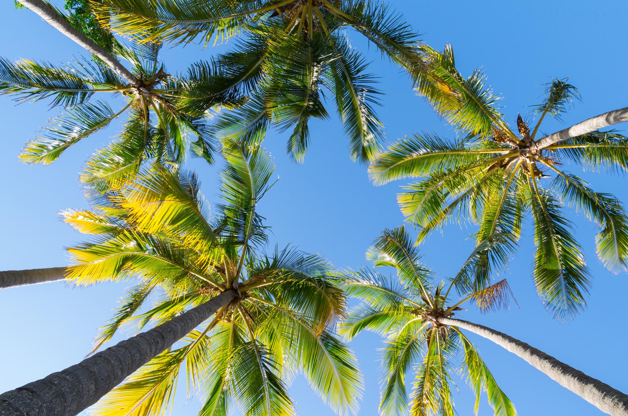 Tree Transplanting saves Palms!!!