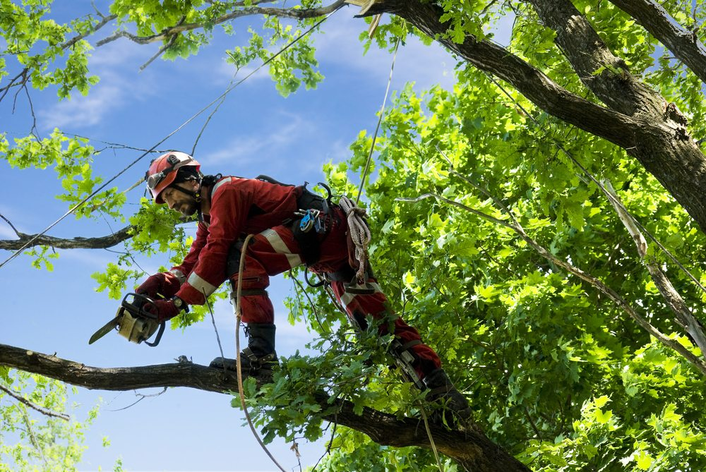 Tree Care Firms And Arborists Are NOT All The Same