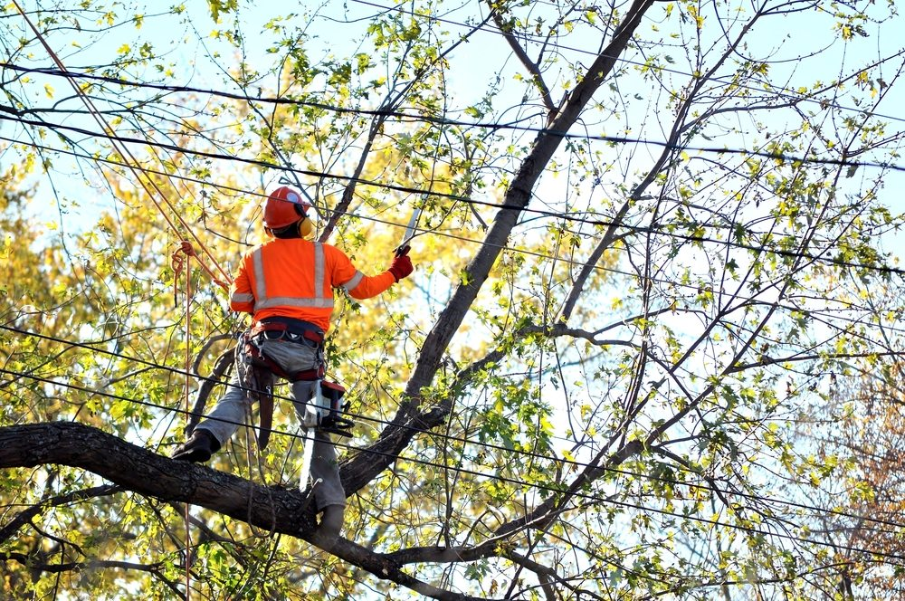 What's happening at Priority Tree Services this week