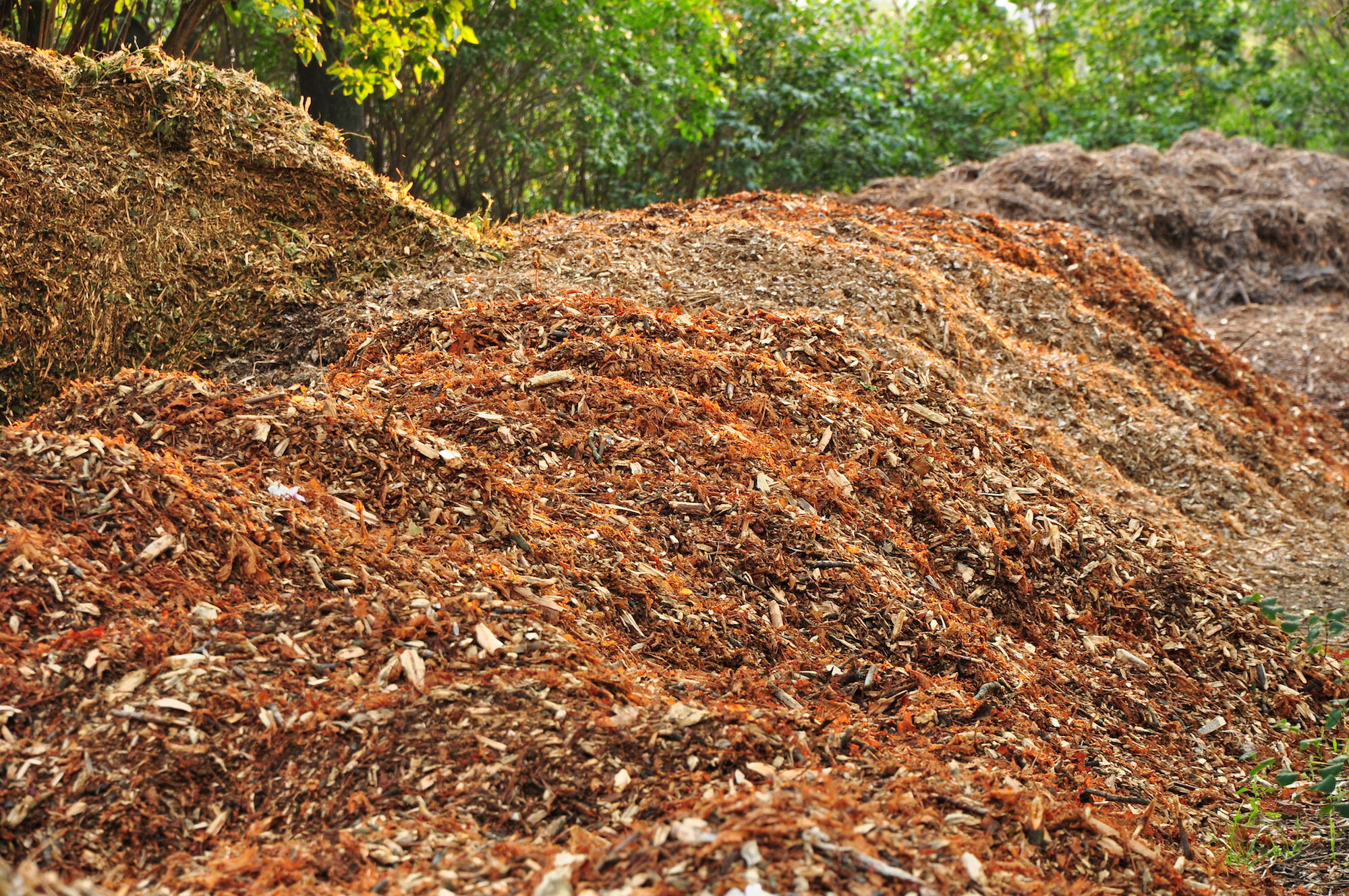 Composting of Autumn Leaves