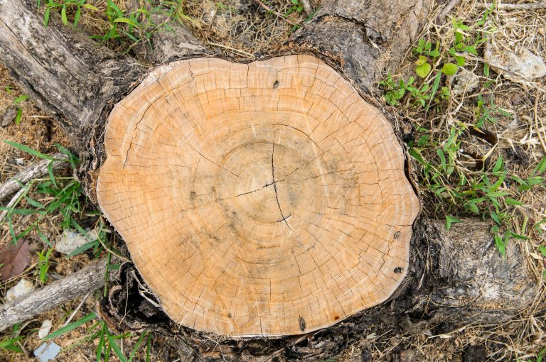 trees stump by priority trees