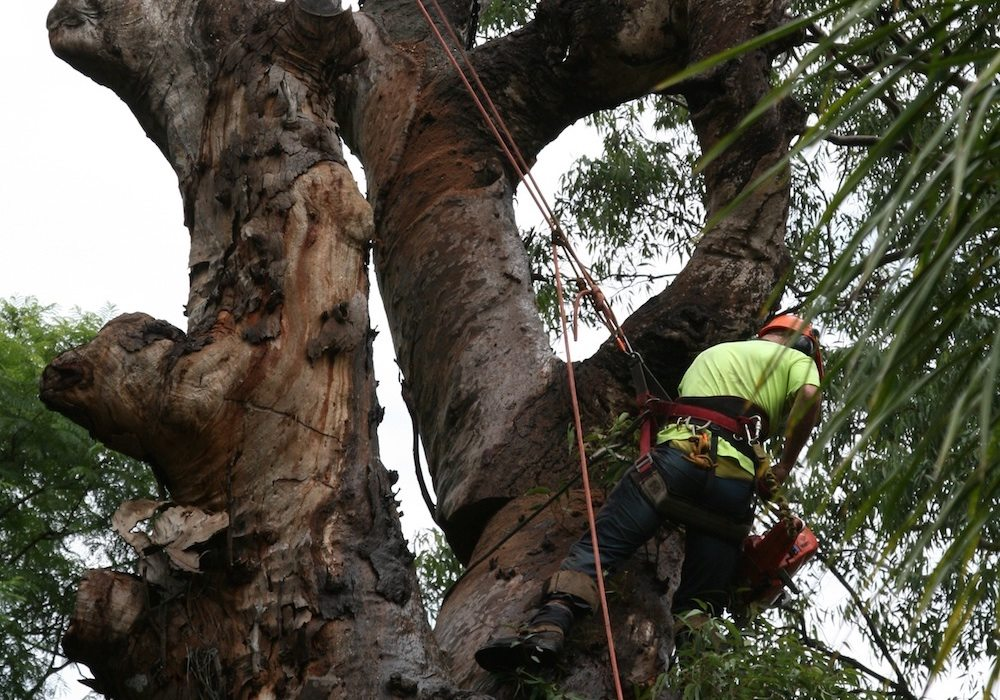 Why Use a Qualified Arborist?