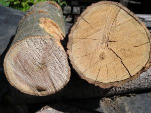 deadwood cut by priority trees
