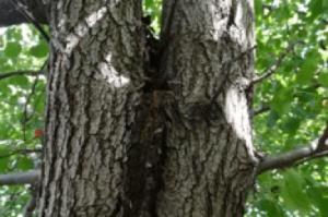 tree bark inclusion