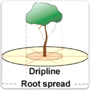 soil dripline root spread chart