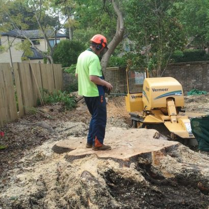 stump removal conducted by priority trees