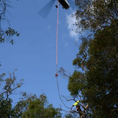 tree was carried by a chopper by priority trees