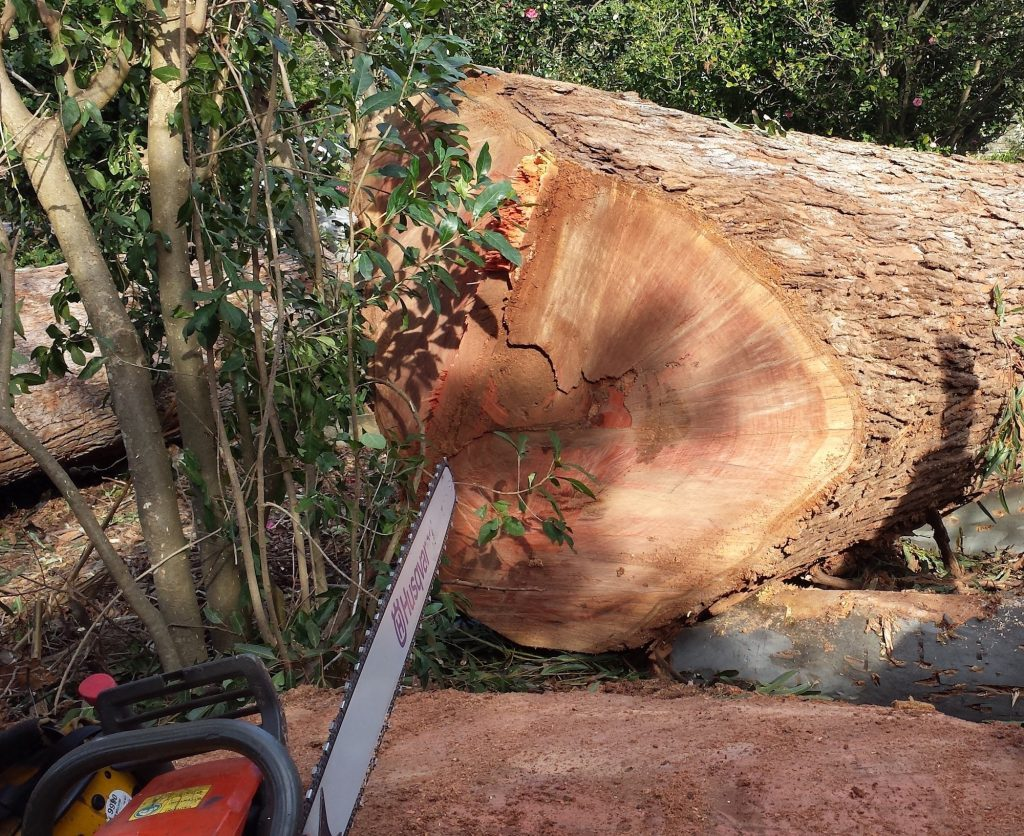 tree felling using a chainsaw
