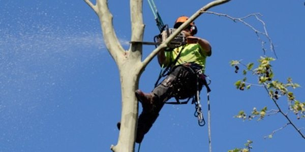 deadwood pruning by priority trees