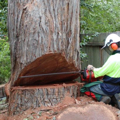 tree removal by priority trees