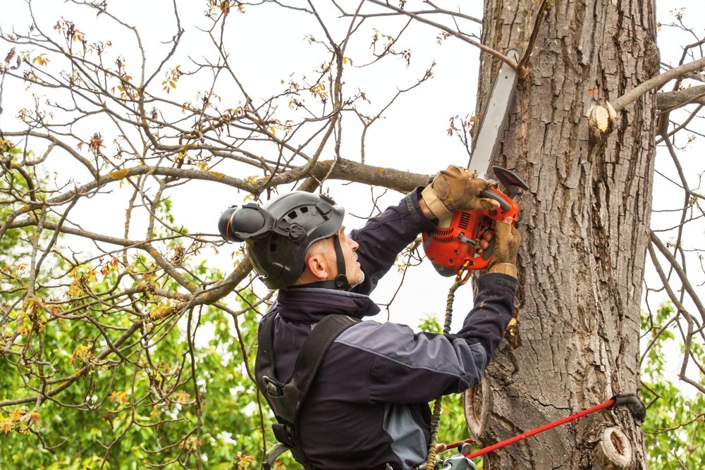 st ives tree removal by priority trees