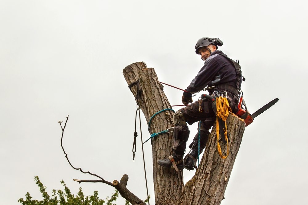lane cove tree removal by priority trees