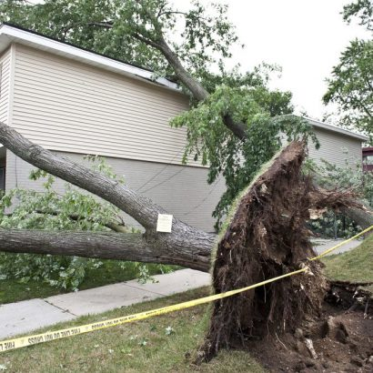 an emergency tree removal by priority trees