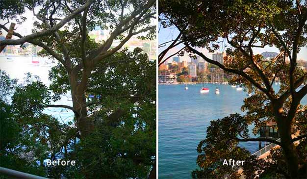 before and after look of tree trimming by priority trees