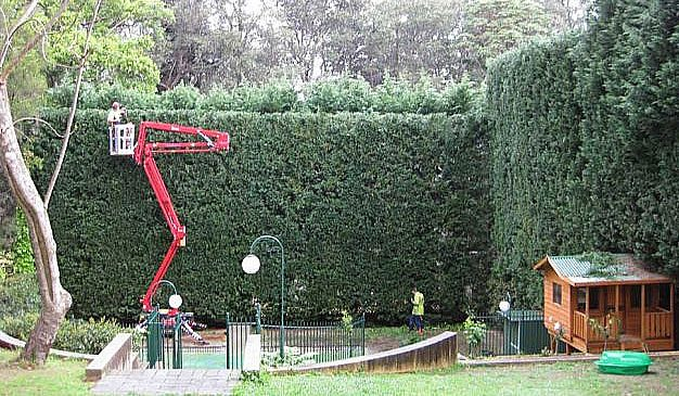 hedge trimming by priority trees