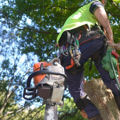 man in harness and chainsaw was conducting tree cutting by priority tree