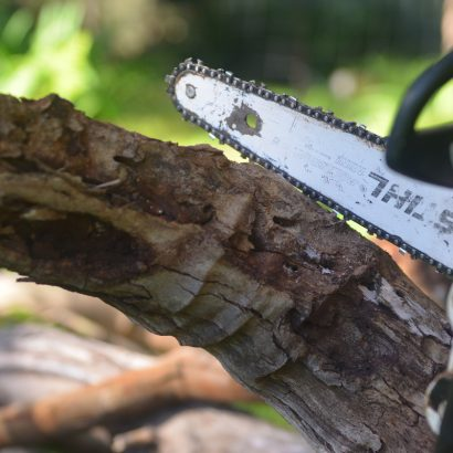 chainsaw and dying chopped stem by priority trees