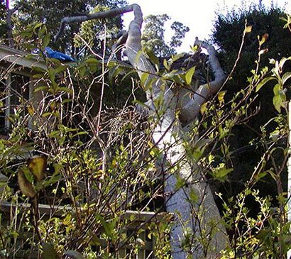 tree that has damage by the storm way urgently remove by priority trees