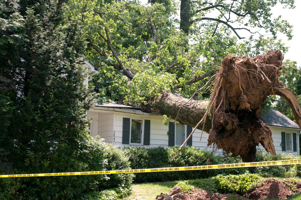 tree hit by the storm was removed by priority trees
