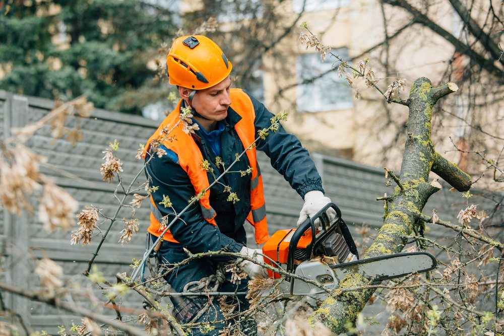 tree lopping roseville by priority trees