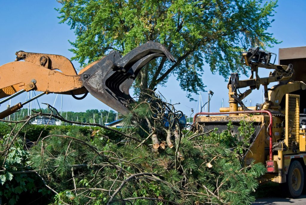 tree removal north shore by priority trees