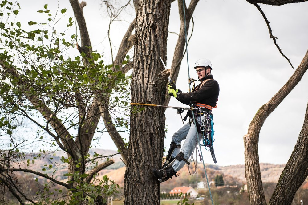 Does Your Tree Need Pruning?
