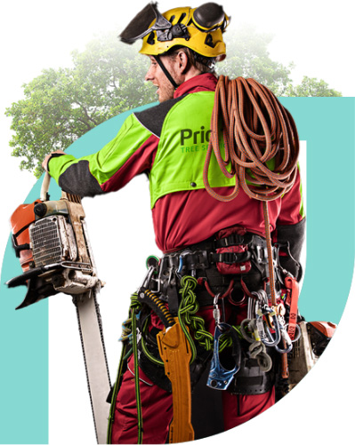 Quality Tree Service Without Compromise priority tree services