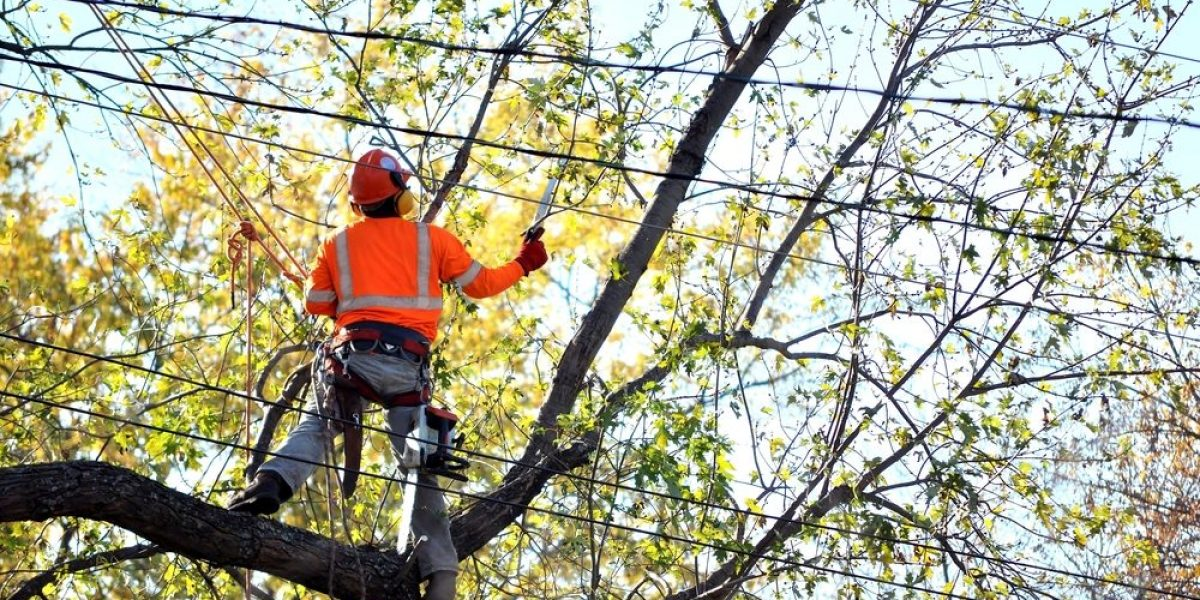 specialized tree removal conducted by priority trees